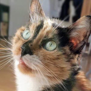 Hat meine Katze Diabetes?