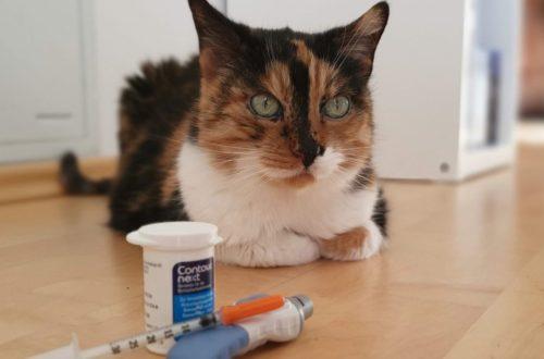 Katze mit Diabetes