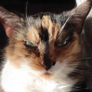Katze hat Diabetes